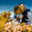Stock Photo: Diver and clownfish