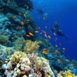 Divers on a colourful reef — Stock Photo #4019261