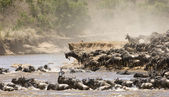 Great Migration — Stock Photo