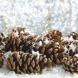 Stock Photo: Snow covered pine cones