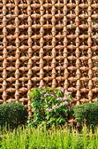 Rostlina hrnec zeď — Stock fotografie