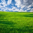 Green grass and blue sky with clouds — Stock Photo #4020019