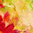Maple leaves in beautiful autumn colours — Stock Photo #4118259