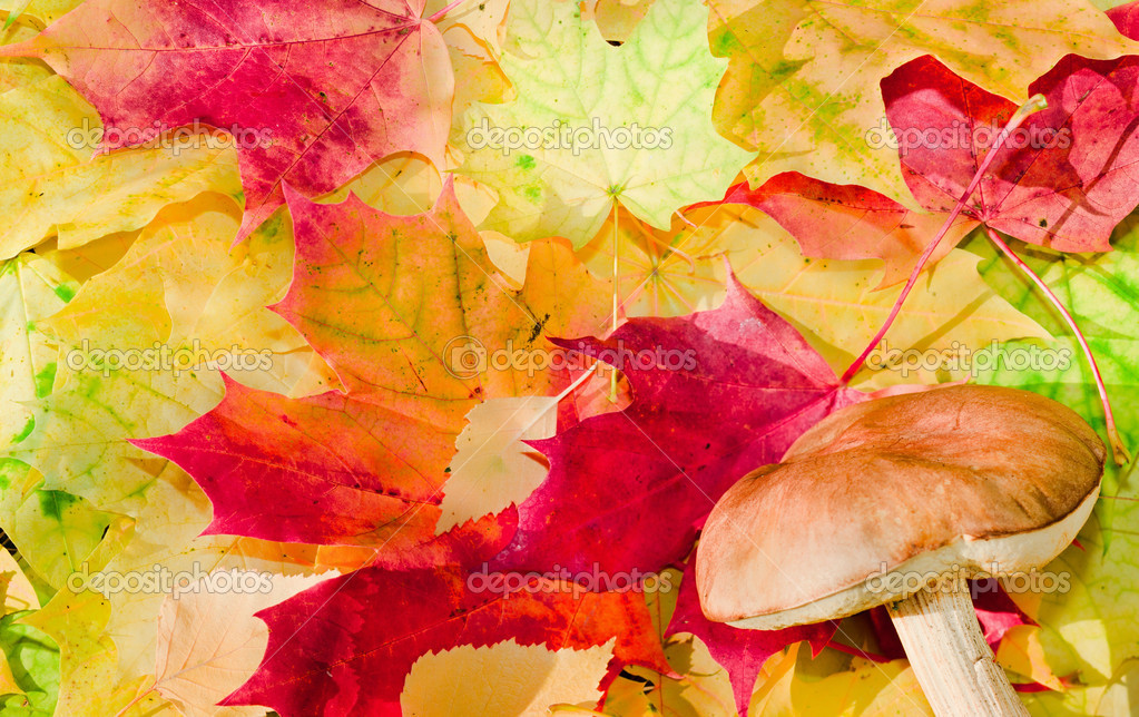 Maple leaves in paints of  beautiful autumn — Stock Photo #4118366