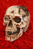 Skull with spider — Stock Photo