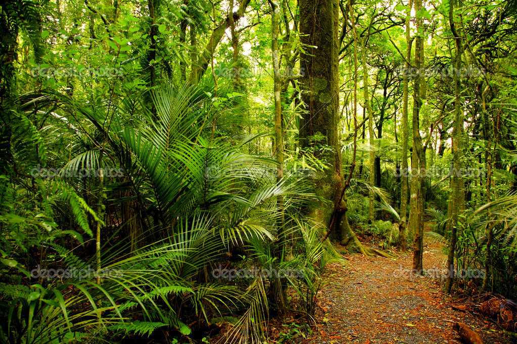 Walking trail in New Zealand tropical forest  — Stock Photo #4017313