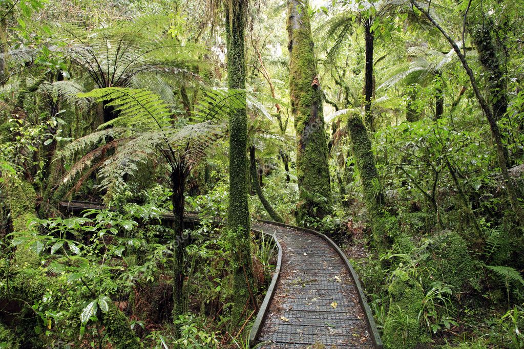 Walking trail in New Zealand tropical forest   Stock Photo #4019053