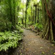Tropical forest — Stock Photo #4167863