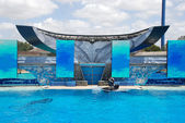 Killer whale Shamu show — Stock Photo
