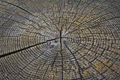 Nasekat dřevo bloku — Stock fotografie