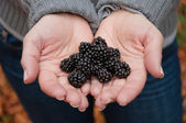 Blackberry in hands — Stock Photo