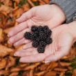 Blackberries in hands — Stock Photo #4319285