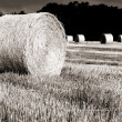 Hay roll in sunrise — Stock Photo
