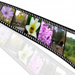 Foto Stock: Film strip