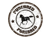 Purebred horse stamp — Stock Vector