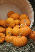 Orange pumpkins tumble from wooden barrel — Stock Photo