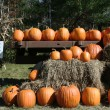 Pumpkins for sale — Stock Photo #4071898