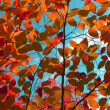Autumn leaves against blue sky — Stock Photo #4129243