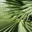 Tropical tree leaves — Stock Photo