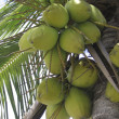 Stock Photo: Green coconuts