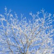 Frost covered tree branches — Stock Photo #4905474