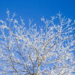 Frost covered tree branches — Stock Photo