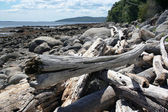 Driftwood on beach — Stock Photo