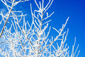 Frosted branches against blue sky — Zdjęcie stockowe