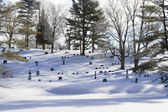 Winter in cemetary — Foto Stock