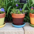 Stock Photo: Spring flowers in pots
