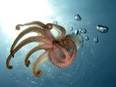Tentacles — Stock Photo