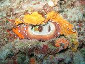 Octopus — Stock Photo