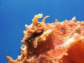 Octopus eye — Stock Photo