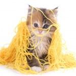 ������, ������: Kitty