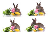 Little rabbit and flowers — Stock Photo