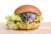 Hamster and food — Stock Photo