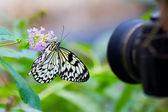 Shotting butterfly — Stock Photo