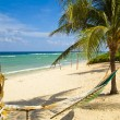 hamock between two palm trees on stunning beach in grand cayman — Stock Photo