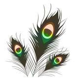 Peacock plumes. — Stock Photo