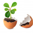 Stock Photo: Green plant grows in egg.