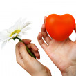 Stock Photo: Orange heart and flower in womhands for valentine day.
