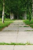 Viale legno — Foto Stock