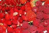 Red berries — Stock Photo