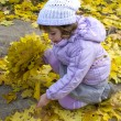Little girl collect maple leafs — Stock Photo
