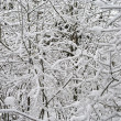 Branches of trees in the snow — Stock Photo