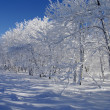 Stock Photo: White winter landscape
