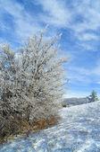 Beautiful winter forest — Stockfoto