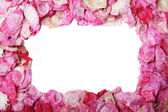 Petal frame — Stock Photo