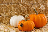 Three small pumpkins against straw with shallow depth of field — Stock Photo