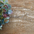 Colorful dried Hydrangea against rustic wood with copy space - Foto de Stock